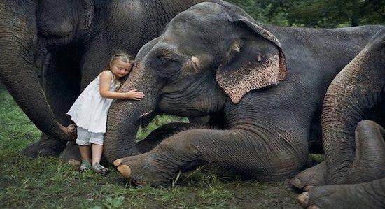 animais e1514508313150